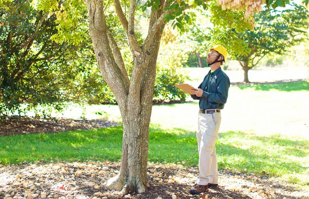 Visual Tree Assessment